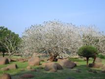 arbre de vie, arbre d'espérance