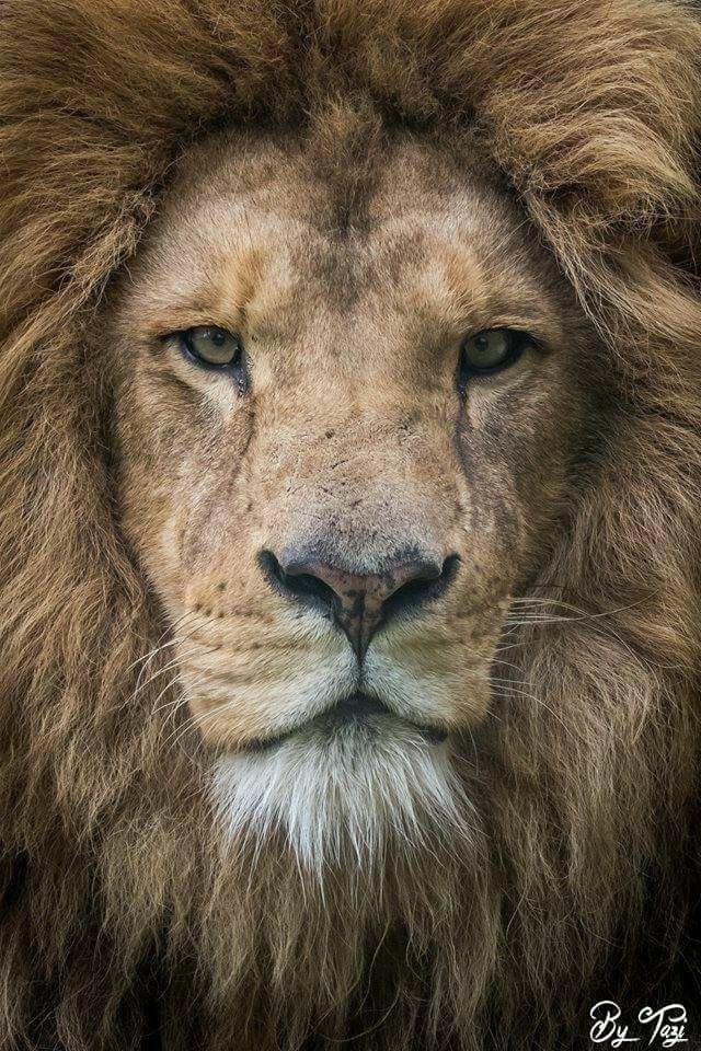 Pour rejoindre l'action, cliquez sur l'image du Lion ;-)